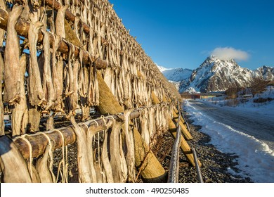 Codfishes drying on traditional wooden racks in Lofoten Islands, Norway, Europe