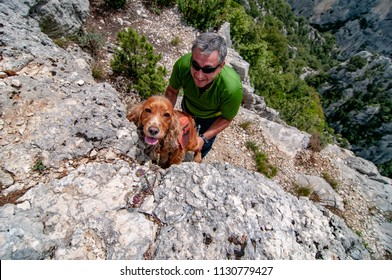 coecker spaniel dog with backpack on mountain trail