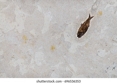 Coelacanth, ancient fish fossil on sand stone