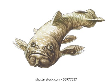 Coelacanth. Latimeria. The prehistoric fish who has lived up to now.