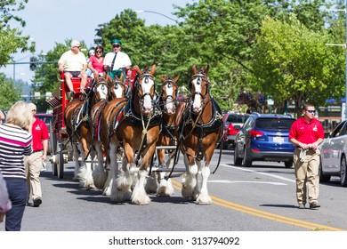 Coeur d' Alene, Idaho - June 12 : Budweiser Clydesdales parade down Sherman avenue, June 12 2015 in Coeur d' Alene, Idaho