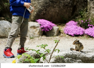 The coexistence of humans and wildlife. A little boy is getting into close touch with a tiny squirrel in due time.