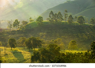 coffee area landscape in colombia