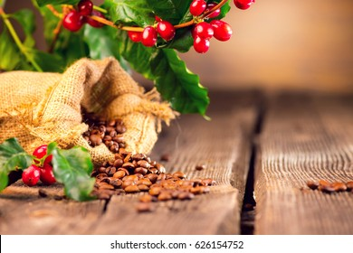 Coffee background. Real coffee Plant on wooden table. Border art design with Red beans on a branch of coffee tree with ripe fruits. Harvest. Roasted beans in a sack. Space for your text