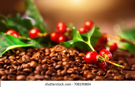 Coffee background. Real coffee Plant on roasted coffee. Border art design with Red beans on a branch of coffee tree with ripe fruits. Harvest. Roasted beans closeup. Space for your text.