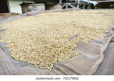Coffee bean process by sun light