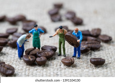 Coffee beans business expert or professional concept, miniature people figurine worker selecting roasted coffee beans on gunny bag background, selecting best quality.