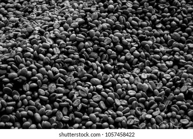 Coffee Beans drying in the open, Coffee Plantation