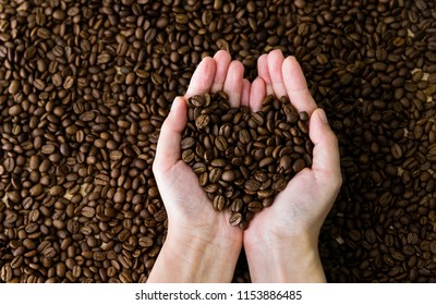 Coffee beans in hands of heart shaped.