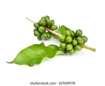 coffee beans and leaf on white background.