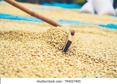 coffee beans process in Thailand