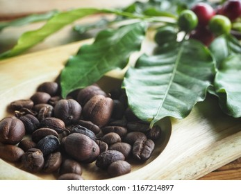 Coffee beans roasted and plant