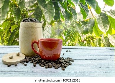 Coffee beans with seeds on the farm