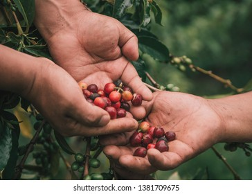 COFFEE BEANS SHARING WITH HANDS