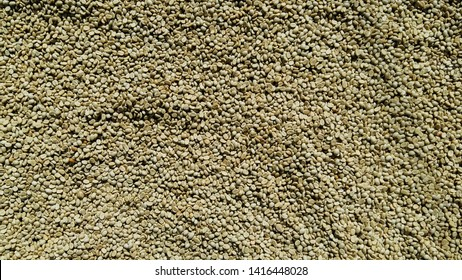 Coffee beans that have been exposed to the sun to reduce moisture before roasting the coffee beans in the roasting machine to get roasted coffee beans that are ready to be eaten and sold.