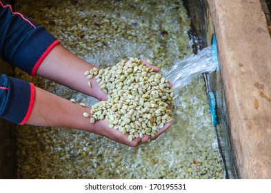 coffee berries after the ferment-and-wash method of wet processing.