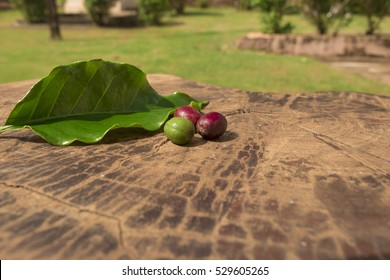 Coffee - Concept image of coffee fruits at green, red and brown stages next a cofee leaf