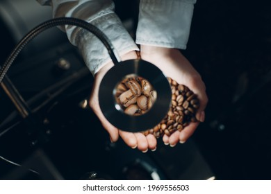 Coffee cooling in roaster machine at coffee roasting process. Young woman worker barista Mixing and hold coffee beans in hands at magnifier.