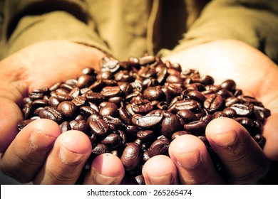 Coffee Farmer Showing Coffee Beans - Warm Light
