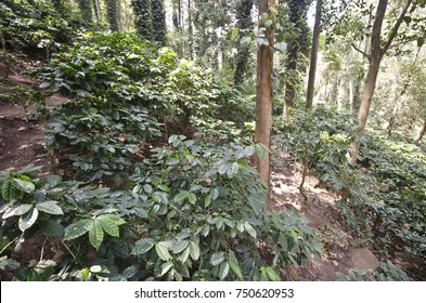 Coffee garden at vizag,araku valley