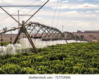 Coffee Irrigation using the center pivot sprinkler system, in Brazil