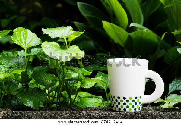 Coffee in the middle of the green leaves in the morning to refresh the coffee.