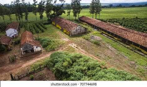 Coffee plantation farm in Brazil