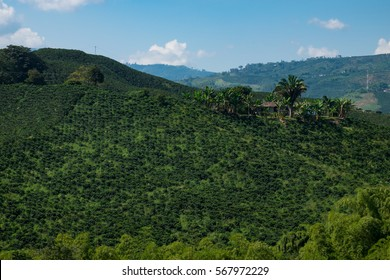 A coffee plantation in mountainous Colombia