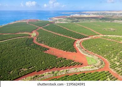 Coffee Plantations near Hanapepe seen from helicopter in Kauai, Hawaii.