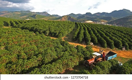 Coffee planted in the mountains of matas de minas, totally manual harvesting, landscapes in clouds and moments that the agriculture is illuminated by the sun, certified farms with prod