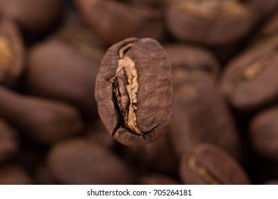 Coffee seed on dark background