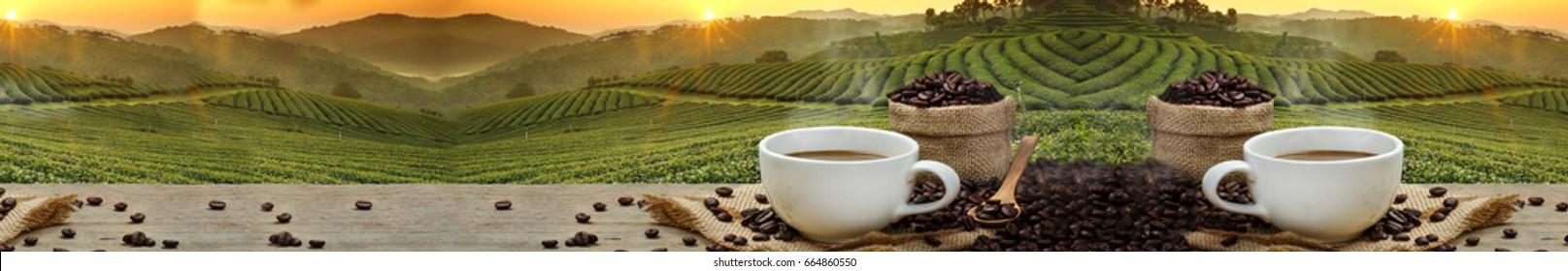 Coffee theme, coffee plantation