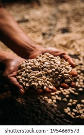Coffeefarmer in the backcountry of vietnam holding his fresh coffeebeans