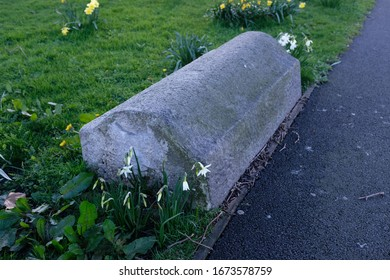Coffin Shaped Stone Slab in Park beside Tarmac Footpath with Yellow and White Narcissus Daffodil Flowers and Green Grass in Springtime