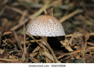 cogumelo natureza fungo mushroom macro photo