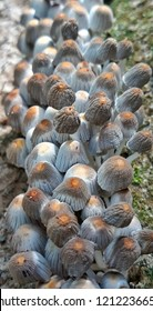 Cogumelos de um Parque Florestal brasileiro 📸