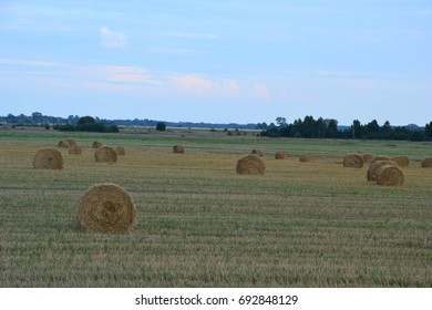 Coiled straw in a field