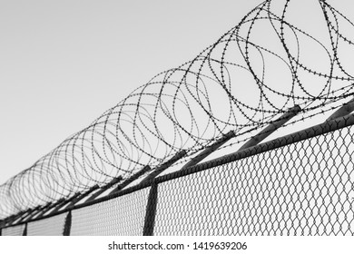 Coils of razor wire on top of a wire mesh perimeter fence, black and white