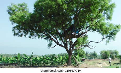 Coimbatore, Tamil Nadu, India, March 26, 2017: Elephant watch tower Build In Top Of Trees And Open Grounds At Coimbatore Rural Areas Tamil Nadu, India