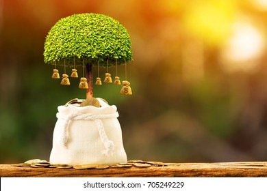 Coin in the bag with growing to a money bag of tree put on the wood in the morning sunlight, Business investment and saving concept.
