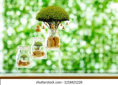 Coin in the clear bottle and money bag of tree with growing interest on the morning sunlight in the public park, Business investment and saving money concept.