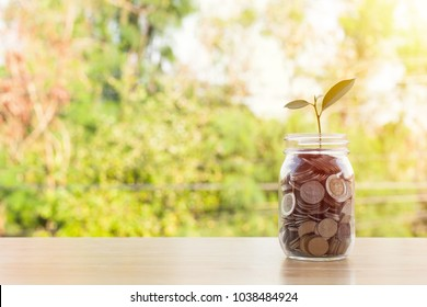 Coin in glass bottle or plant growing on coins in glass jar on wooden table with blurred green nature background. Money stack for business planning investment. Investment and saving concept