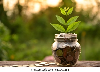 coin in glass is placed on a wood floor and tree top growing with nature background for business concept.