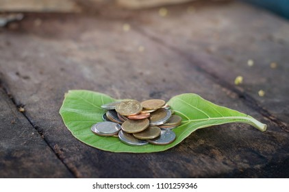 Coin Leaves Wooden floor background