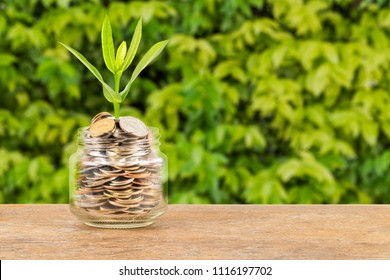 Coin money jar with plant on green tree background
