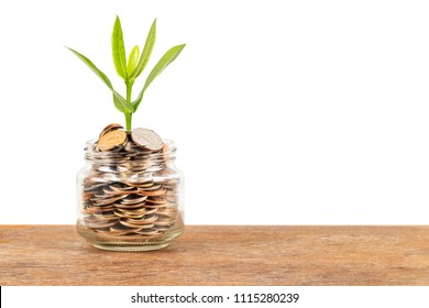 Coin money jar with plant tree on white background