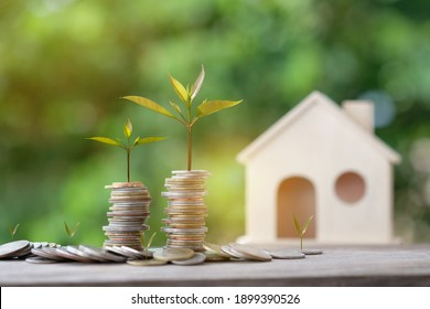 Coin money stack and small green trees are growing growth. Saving money for house. Concept financial business investment. copy space