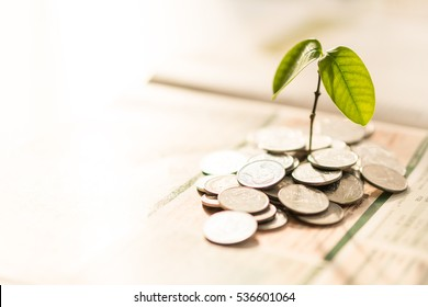 coin with small plant tree, saving money concept, copy space on Left side.