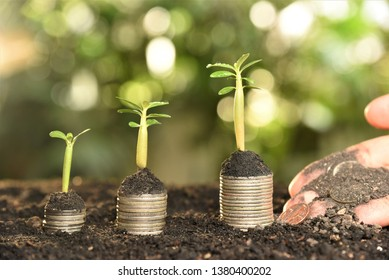 coin stack with azalea sprout on top with hand fertilizing coin