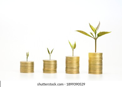 Coin stack step up and small green trees are growing growth. Saving money in gold egg. Concept financial business investment. copy space